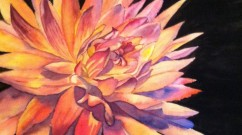 Noreen Brunini, Dahlia, Watercolor.