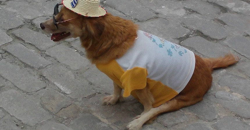 Melanie Sze, Old Havana Dog, Photography.