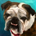 Grumpy bulldog